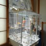 カズナル ~鳥達の襲撃
