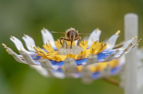 【研究】雨を砂糖水に変え、昆虫にとっての食料源となる「人工花」をつくるプロジェクトが開始されるwwwwwのサムネイル画像