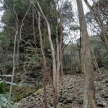 『荒れていた谷(多良)』の画像