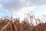天の川沿岸が開発され、稲作がさかんに!~カタノの歴史No.12~