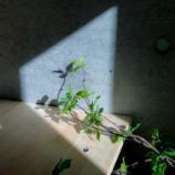 『写真にとって太陽の光はやはり偉大であるという話』の画像