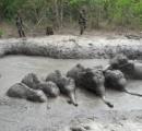タイで象の赤ちゃん6頭を泥沼から救出