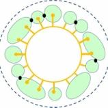 『徒然に光マイクロバブル(12)新型コロナウイルス(8)』の画像