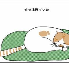 親心を踏みにじる猫