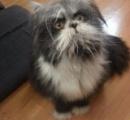 Twitterに投稿されたペットの写真 犬か猫かを巡りネットで話題に