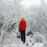 『霧氷の雲仙岳へ』の画像