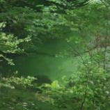 『美しい渓流へ』の画像