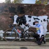 『走り初めで牛さんに会いに行った』の画像