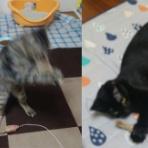 三度の飯<犬と猫