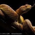 WHO「顧みられない熱帯病」に命をうばうヘビ毒を指定