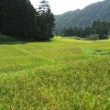 『稲刈りの準備が始まりました』の画像