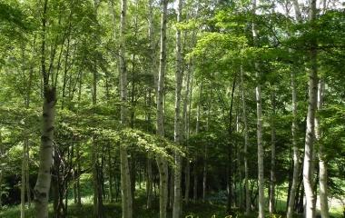 『広島県民の森 』の画像
