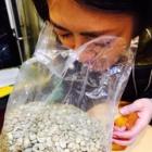 『豆を嗅ぎに。』の画像