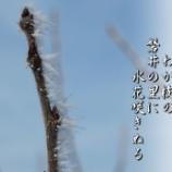 『氷花咲く』の画像