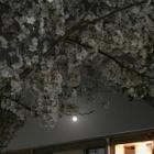 『春に想う 〜「さまざまのこと思ひ出す桜かな」』の画像