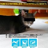 『ペットの災害対策について考える(その2)』の画像