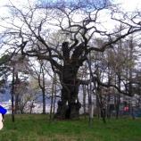 『とおのさくらあるき【大日山の桜】』の画像