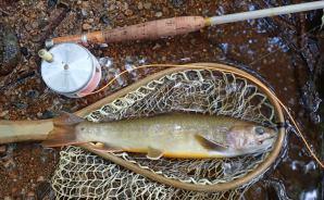小さな渓流で釣りをしていたら
