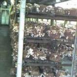 『(番外編)椎茸の菌床』の画像