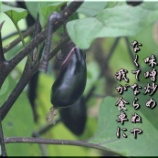 『茄子炒め』の画像