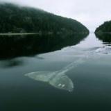 【衝撃】これを超えるクジラの怖い画像ってないよな