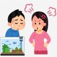 ワイ「60センチ水槽で日本淡水魚飼いたい」ヨッメ「だめー」