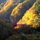 『紅葉の記憶「高山村松川渓谷」』の画像