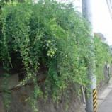 『萩の花』の画像