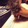 宿題を手伝ってくれる子ニャンコが可愛いwww