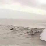 『イルカと一緒にサーフィンしよう♡』の画像