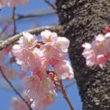 『上野の春 [写真] WX500』の画像