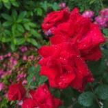 『【写真】 梅雨の休日(Xperia Z5p)』の画像