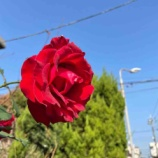 『【朝のご挨拶】戸田市後谷公園の東南角地・まちかど広場にイルミネーションの灯を!昨夕、トダイルミの試験点灯が成功しました。』の画像