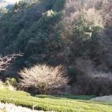 『宮崎県諸塚村を訪ねて』の画像