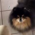 うちのイヌに「たまご」を見せてみた。ください、ください! → タマゴ好きな犬はこうなります…