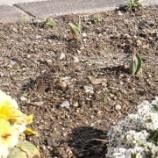 『春を迎える準備(1/30)』の画像