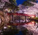 弘前の桜、ネットで話題に 「世界よ、これが弘前の桜だ。」
