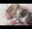 手の平の上で無防備な寝姿をさらす子猫 可愛すぎる姿にコメントが殺到