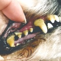 『ペットのEMはみがき』が、いままで使った歯磨きで一番よかった!