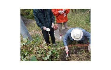 『畑で芋ほり』の画像