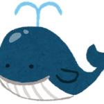 【捕鯨】ニュージーランド野党が日本を過激批判! 「脅してでもやめさせろ」