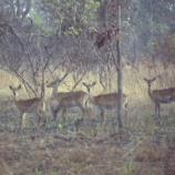 『行った気になる世界遺産 コモエ国立公園』の画像