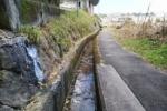 ちっちゃな氷瀑(ひょうばく)できてる!私市駅近くの涌き水のところ
