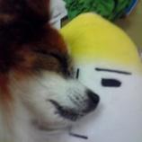 『大根とワンちゃん』の画像