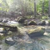 ラスト釣行、千曲の美渓に染まる!の写真