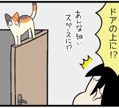 猫は高いところに登るのが好きだけど…降りられなくなる事件が発生する