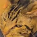 【ネコ】 男が台所で料理の準備をしていた。そこから出なさい。イヤにゃ! → 猫はここにいます…