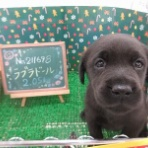 ペットショップワンラブ フレスポ御所野店のスタッフブログ