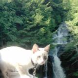 子猫レオンの旅行記2!「龍頭之滝」行ったニャーの写真