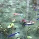 """『モネの池(岐阜県関市)が『死ぬまでに一度は見たい!思わず感動する日本国内の""""神秘的な池""""5選』に選ばれましたよ。しかも見出し画像も「モネの池」!』の画像"""